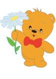 Bear flower Royalty Free Stock Photos