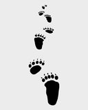 Bear footsteps. Trail forward of bear footsteps,  illustration Royalty Free Stock Photos
