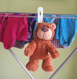 Bear fun royalty free stock photography