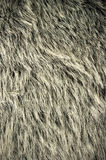 Bear fur Stock Photos