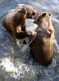 Bear game. Brown Bear (Ursus arctos) in National Park Bavarian Forest - Germany Europe Stock Photo