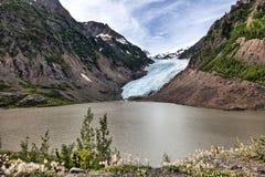 Bear Glacier Royalty Free Stock Image