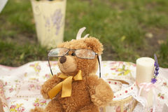 Bear with Glasses Stock Images
