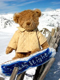 Bear on the snowbord. Bear go in for sport in mountains Stock Image