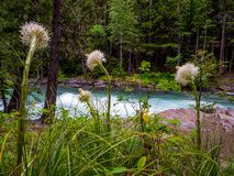 Bear Grass With McDonald Creek in the Background stock images