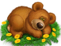 Bear on the grass. Teddy bear lying on the green grass with dandelions Royalty Free Stock Photos