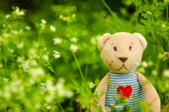 Bear on a green background royalty free stock image