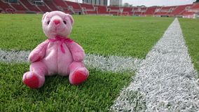 Bear in the green yard. The bear in the stadiuam in Thailand royalty free stock photography