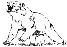 Bear grizzly. Animals wildlife illustration vector royalty free illustration