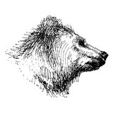 Bear grizzly, drawing in black and write, hand graphic Royalty Free Stock Photography