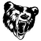 Bear 002 Stock Image
