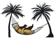 Bear in a hammock Royalty Free Stock Image