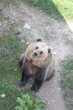 Bear. A happy cheerful bear in the zoo Stock Photo