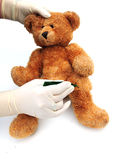 Bear having stitches out Stock Photography