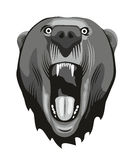 Bear head. Head of a aggressive bear with opened mouth Stock Photos