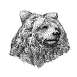 Bear sketch style. Hand drawn illustration of beautiful black and white animal. Line art drawing in vintage style royalty free illustration