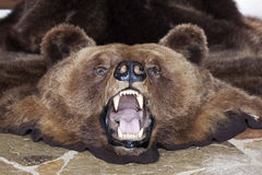 Bear head Royalty Free Stock Photos