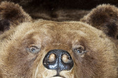 Bear head Royalty Free Stock Photo