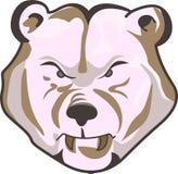 BEAR HEAD Royalty Free Stock Photos