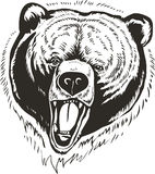 Bear head Vector stock illustration