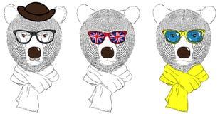 Bear heads in sunglasses Stock Photos