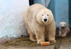 Bear and her cub with a loaf of bread Royalty Free Stock Photo