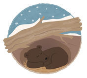 Bear Hibernating. Clip art of a bear sleeping in his den. Eps10 Stock Photography