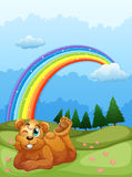 A bear at the hill with a rainbow in the sky Royalty Free Stock Image