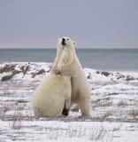 Bear hug Stock Image
