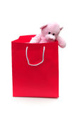Bear In A Bag Royalty Free Stock Photo