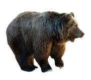 Bear. Isolated  over white Royalty Free Stock Image