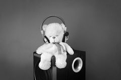 A bear and its music Stock Photos