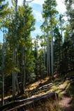 Bear Jaw Trail Stock Photo