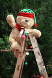 Bear on a ladder Royalty Free Stock Image