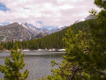 Bear Lake in Rocky Mountains. Bear Lake in forest of Rocky Mountain National Park, Colorado with snowy capped mountains in distance Royalty Free Stock Photography