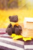 Bear, leaf and books on a bench Stock Photos