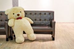 Bear lean back of sofa bench in living room and wood floor. White wall background, concept tried, finish urgent work, hard work, competition, finish match Stock Photography