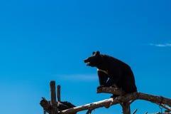 Bear on logs Stock Photos