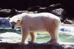 Bear.Look polaire. Image stock