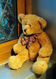 Bear Looking Out Of A Window Stock Photo