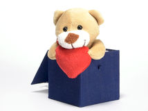 Bear looks out of the box Stock Photos
