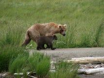 Bear Mama and Cub. Alaska brown bear and cub walk the banks of the Brooks River Stock Images