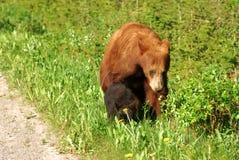 Bear mom and cub Royalty Free Stock Photography