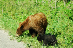 Bear mom and cub Royalty Free Stock Photo