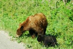 Bear mom and cub royalty free stock photo