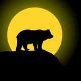 Bear and Moon Stock Image