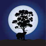 Bear on a moonlight color vector Stock Photography