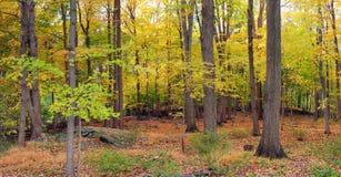 Bear Mountain forest panorama Stock Photos
