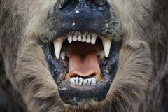 Bear mouth Stock Image