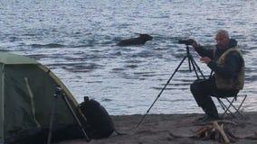 Bear near the tent. stock video
